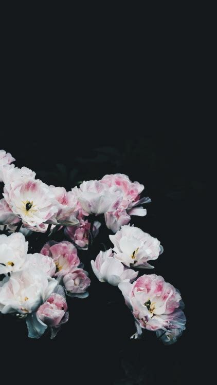 wallpaper tumblr flower fade wallpaper tumblr