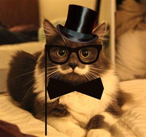 imagenes hipster gatos hamilton el gato hipster cat fun su