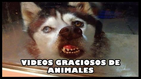 imagenes graciosos de niños videos graciosos de animales 2016 youtube