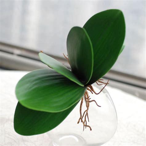 come fare per far fiorire le orchidee le foglie delle orchidee phalaenopsis orchidee come