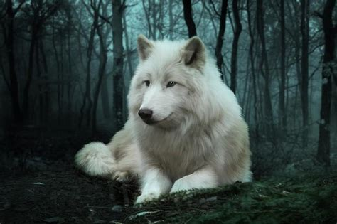 google images wolf wolf hd wallpaper android apps auf google play