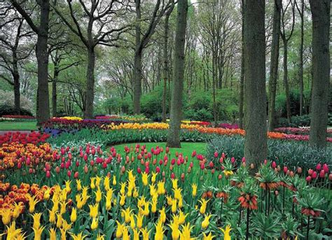 Colorful Wall Murals tulip garden wall mural ds8042 themuralstore com