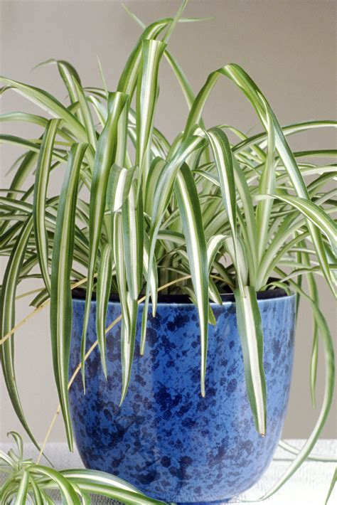 plants that do not need much sunlight 100 plants that do not need much sunlight best