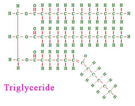 triglyceride molecule diagram image gallery lipid monomer