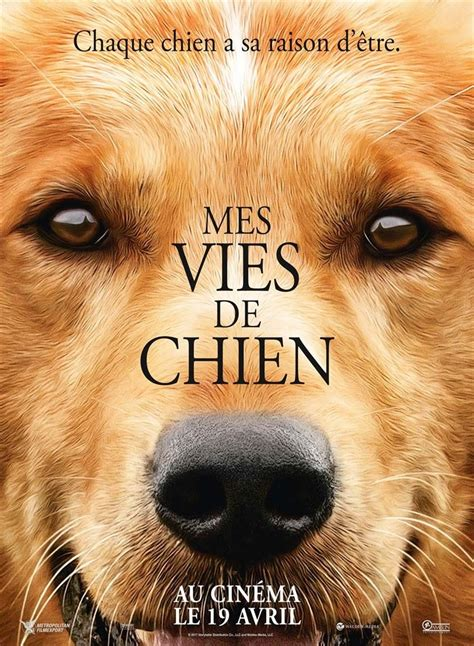 regarder ray liz streaming vf en french complet regarder mes vies de chien streaming vf gratuit complet