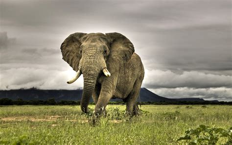 cool elephant wallpaper elephants wallpapers