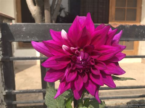 winter flowers  india february spring vol