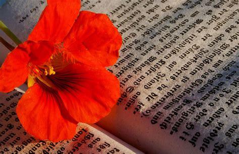 libri e fiori la festa dei libri e dei fiori il di bormio