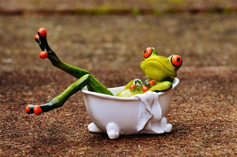 Free photo: Frog, Bath, Swim, Relaxation, Relax   Free Image on Pixabay   1159371