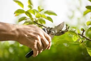 tree pruning day saturday september 13th regreen