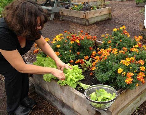 Fall Gardening Ideas Late Fall Garden Ideas Photograph Fall Gardening Tips Gr