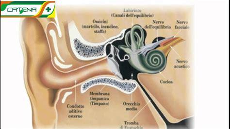 catarro orecchio interno otitele medii supurate