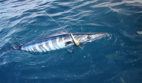 fishing boat rentals miami sport fishing charters and fishing boat rentals in miami