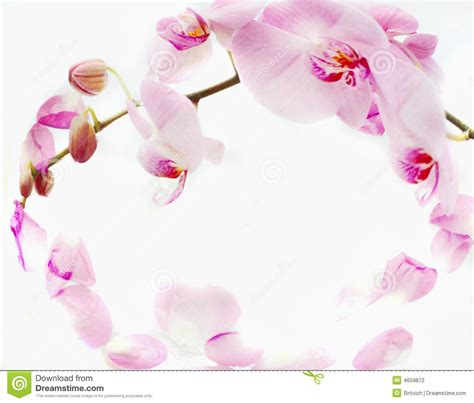 orchids frame stock photography image 4659872 - Orchideen Gestell