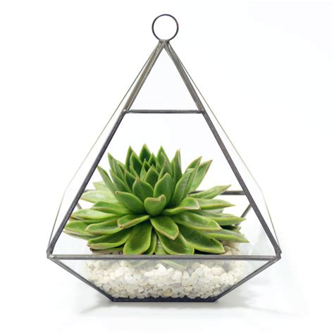 geometric pyramid glass vase succulent terrarium by