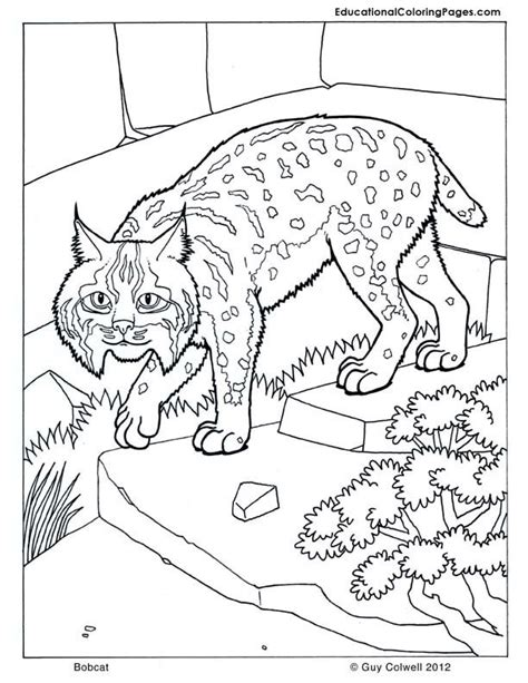 bobcat coloring page free coloring pages bobcat footprint cliparts co