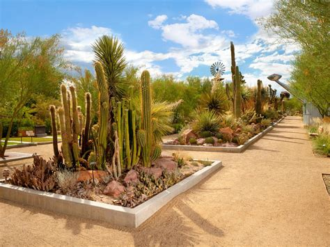 Gardens Las Vegas by Mojave Desert Cacti And Succulents American
