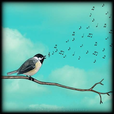 black capped chickadee song music pinterest