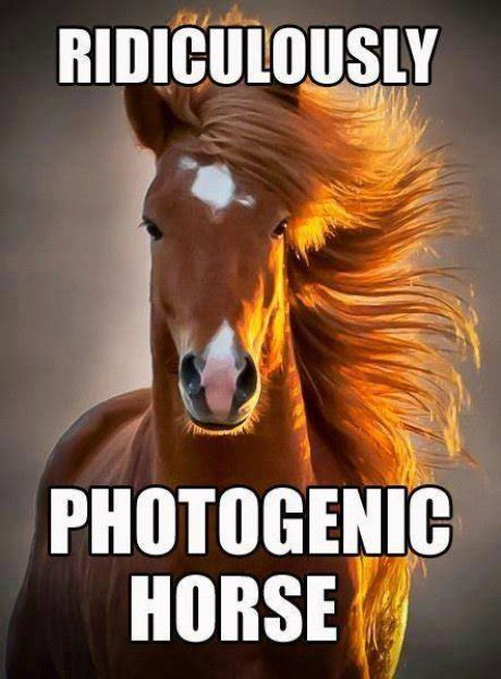 Photogenic Meme - ridiculously photogenic horse memes comix funny pix