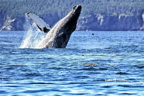 top 28 whale migration oregon oregon whale watching