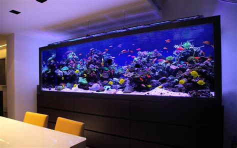 aquarium design ireland footballer s pad aquarium architecture