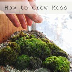 1000 ideas about moss garden on pinterest growing moss gardening and moss terrarium