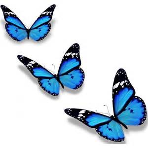 Sticker For Wall Decoration stickers papillon d 233 coration