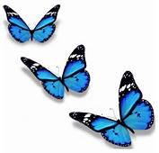 Stickers Papillon  D&233coration