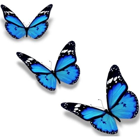 Wall Sticker Butterfly stickers papillon d 233 coration