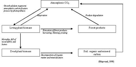flow diagram of carbon cycle simple carbon cycle diagram www pixshark images