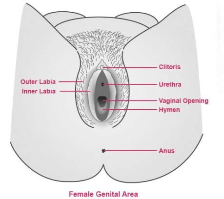 vagina hair shapes vigina shape do this only for one time tonight your