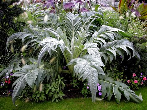 what is a foliage plant silver foliage dirt simple