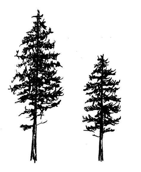 black tree tattoo designs 81 pine tree tattoos and ideas