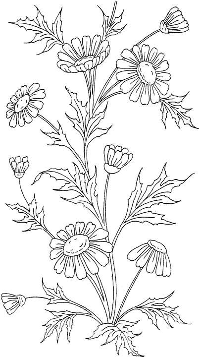 coloring pages of australian flowers flower coloring page