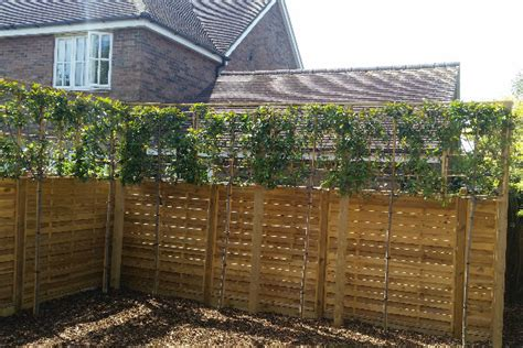 fencing tips    garden secure private