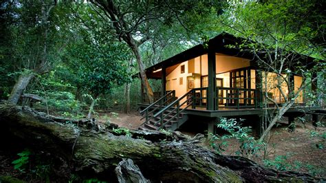 andbeyond phinda forest lodge phinda private game reserve