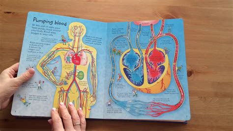 See Inside Your see inside your usborne
