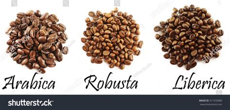 different coffee beans isolated on white stock photo 311976080 shutterstock