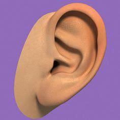 how does vestibular disease last 1000 images about living with menieres disease on vertigo inner ear