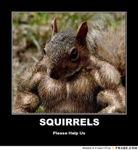 Funny Squirrel Memes - funny squirrel memes nuts