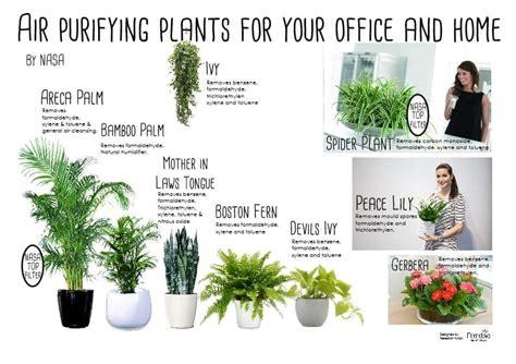 desk plants that don t need sunlight office plants that don t need sunlight 5 to kill