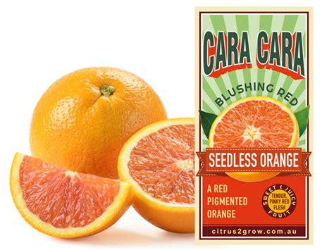 cara cara oranges cara cara seedless blood orange