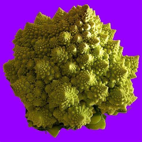 orto invernale in vaso orto invernale ortaggi caratteristiche dell orto invernale
