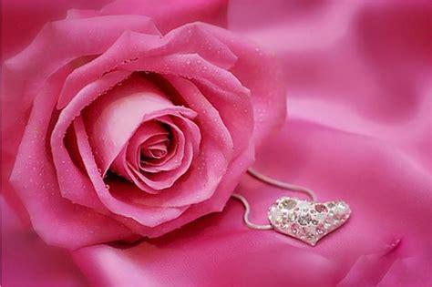 imagenes rosas para mi amiga una rosa frases tiernas para amigas