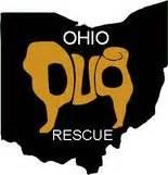 pug breeders in northeast ohio cat injured seeking warmth pup recovers from 2 broken legs pugs need homes animals