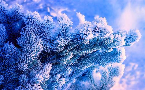 Mainan Salju Frozen Gel Magic Snow winter nature tree blue background blue spruce snow