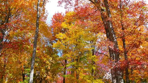 mlewallpapers orange and yellow fall trees