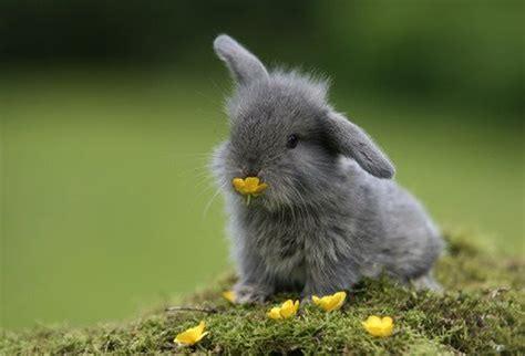 Pp Bunny bunny information happy hoppy bunnies