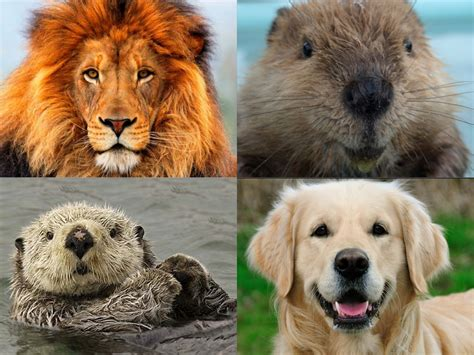 are there different types of golden retrievers how content appeals to different personality types