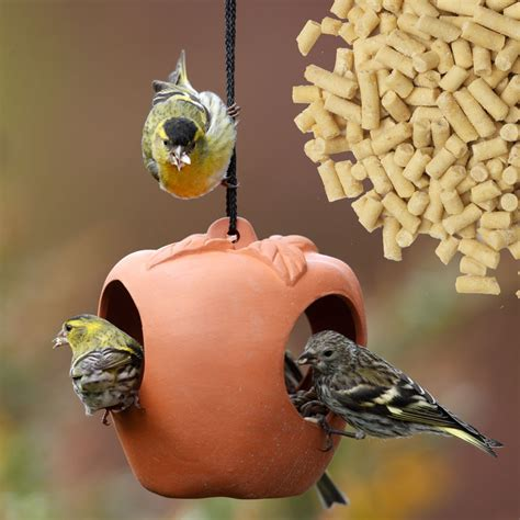 the best possible places to place the bird feeder